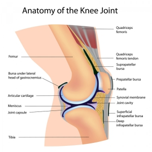 Knee Treatment Work Comp